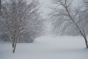 front-yard-trees-in-blizzard-12-26-2010-6-48-30